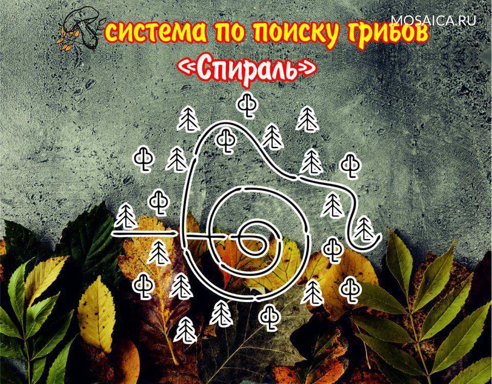 Грибы ульяновской области в 2020 году: грибные места, карта + фото