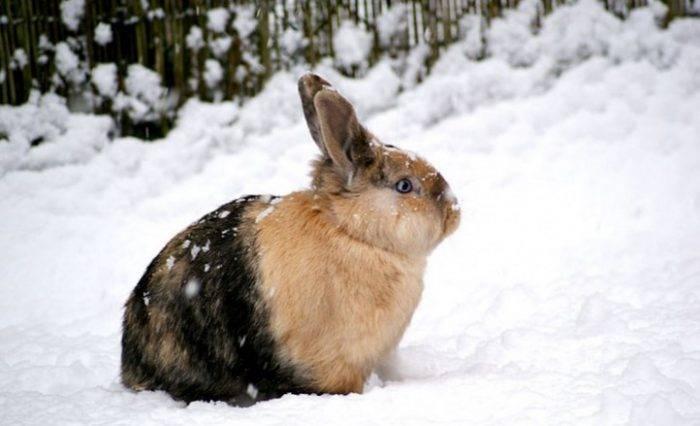 Содержание кролика зимой на улице: утепление клетки, чем кормить, размножение