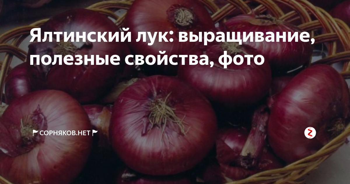 Красный лук — как выращивать