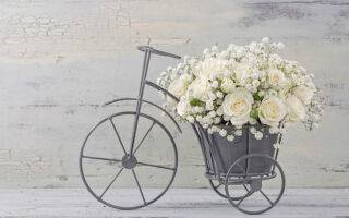 Продлеваем растению жизнь, или как сохранить цветы в вазе