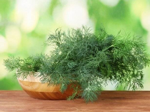 Укроп: посадка и выращивание укропа в домашних условиях на подоконнике