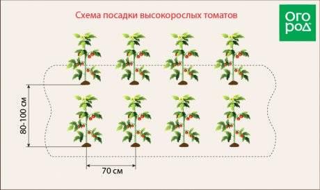 Посадка помидор: как правильно провести посев семян томатов, схемы размещения овоща на даче, в теплице и парнике, уход от а до я, особенности полива, а также фото русский фермер