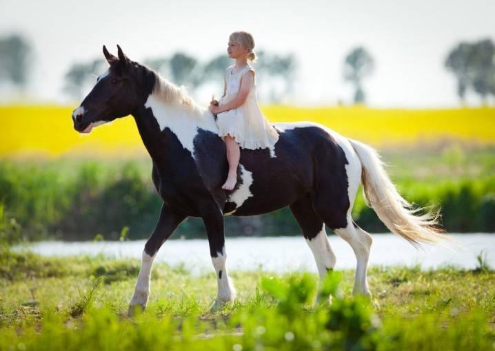Как выбрать кличку для коня?