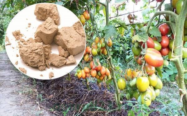 Дрожжевая подкормка для огурцов и помидоров: как удобрять и поливать