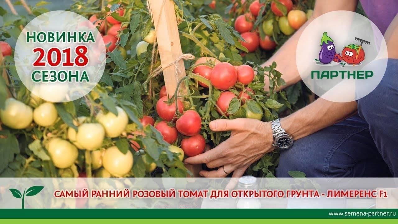 Как повысить урожай томатов путем регулирования развития. какие части томатов необходимо удалить для увеличения урожайности?