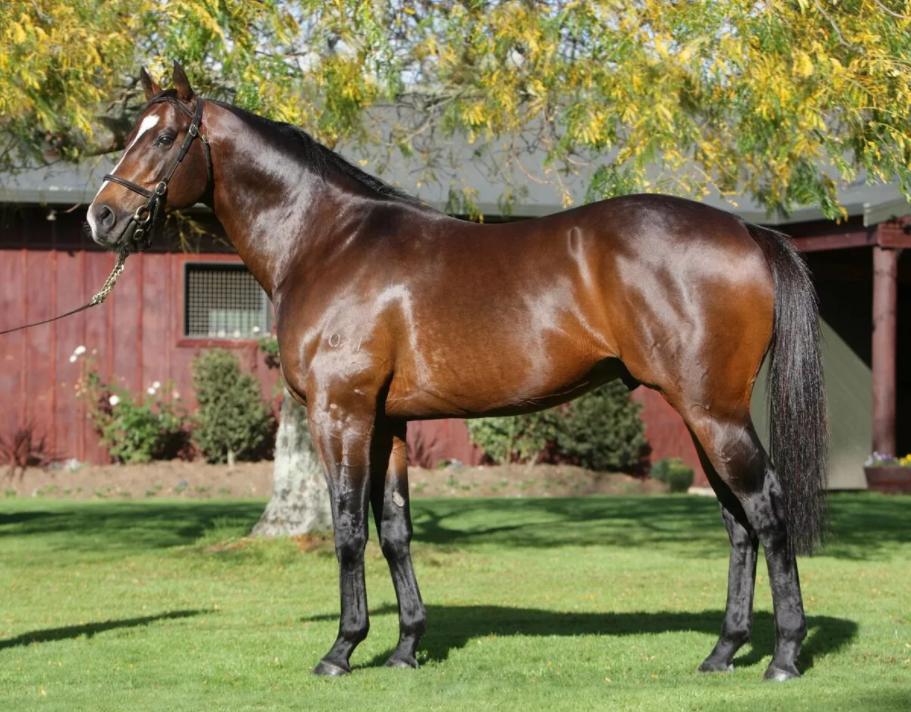 Английская чистокровная порода лошадей, ее обзор и фото английская чистокровная порода лошадей, ее обзор и фото