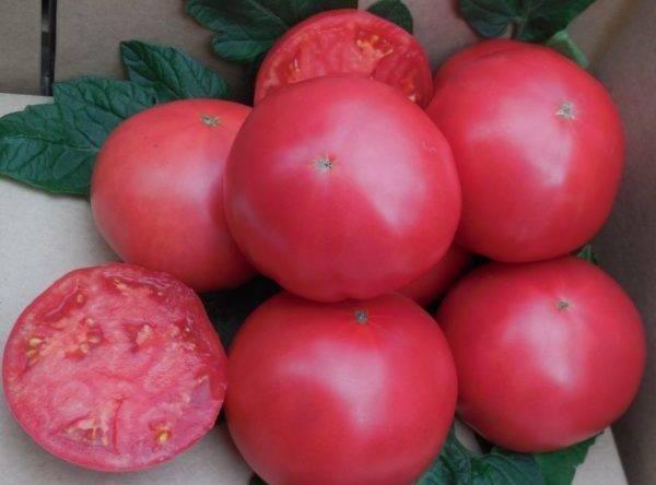 """Томат """"розовый царь"""": описание сорта, характеристики, фото русский фермер"""
