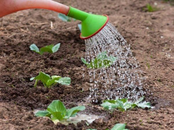 Подкормка дрожжами: простое средство для супер урожая