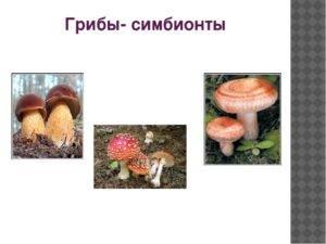 Симбиоз   справочник пестициды.ru