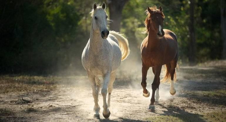 Масти лошадей. описание, особенности и названия мастей лошадей   живность.ру