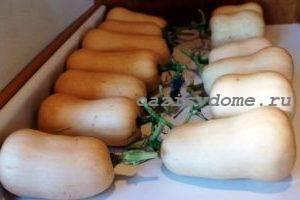 Как дольше сохранить свежими кабачки зимой в домашних условиях