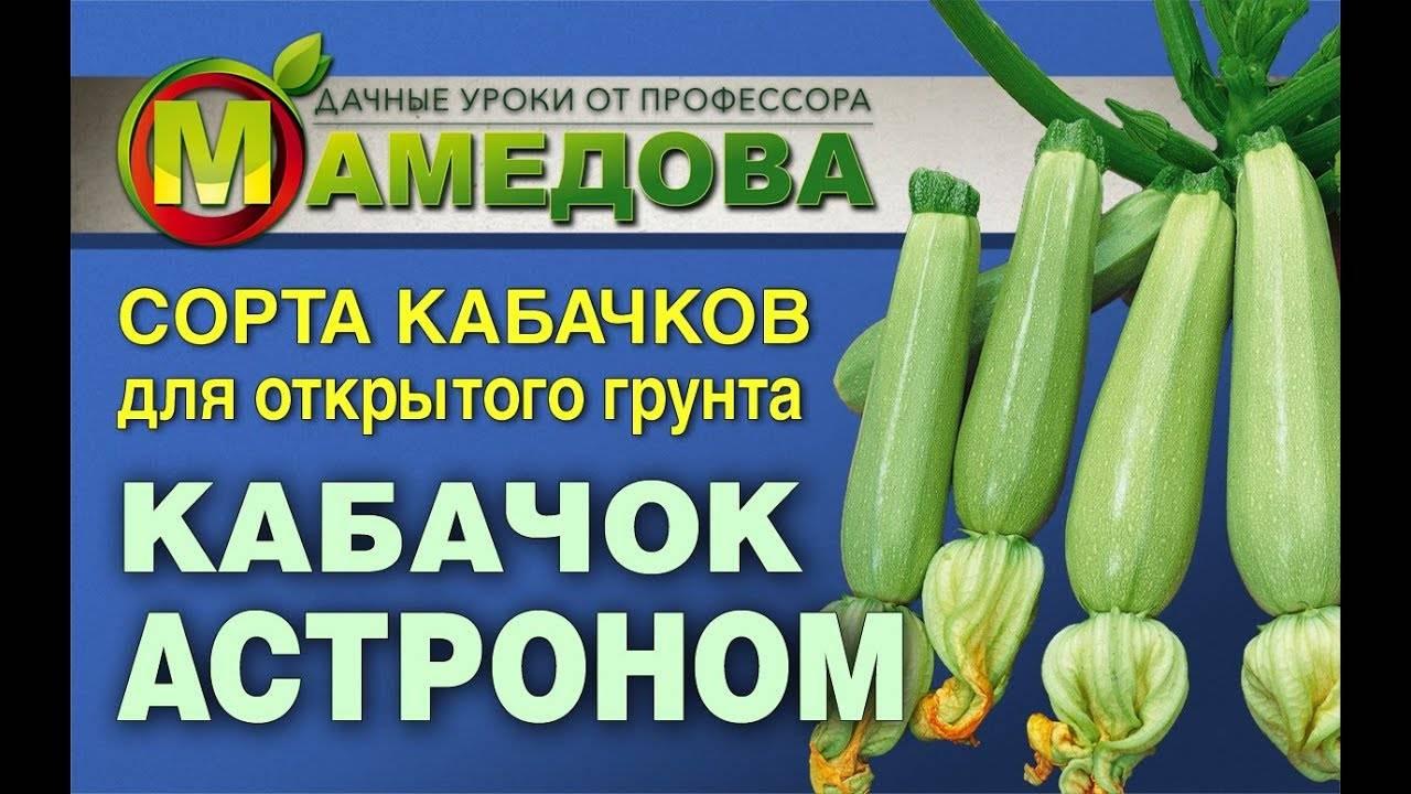 Кабачки кустовые: урожайные сорта, описания, фото, отзывы