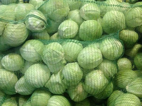Раннеспелый сорт капусты золотой гектар. подробная характеристика и фото