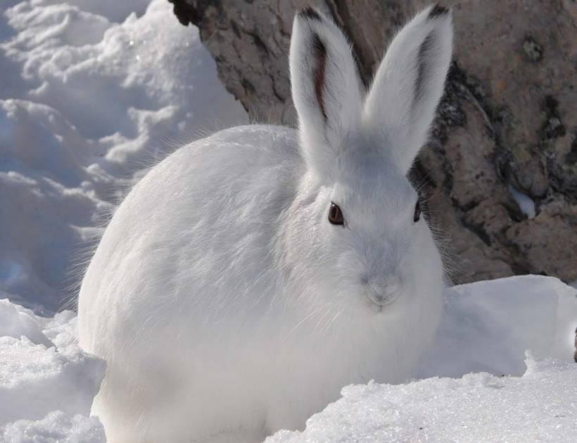Чем питается заяц в холодное время года, делает запасы на зиму или нет