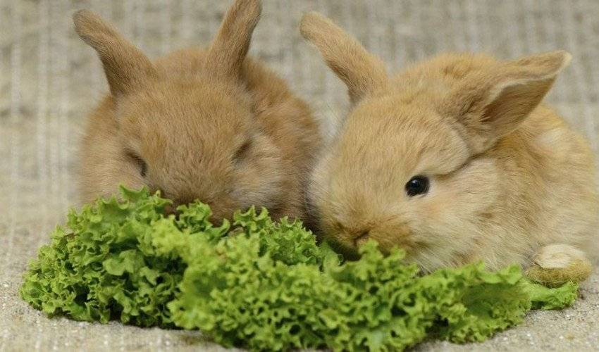 Какую траву давать кроликам можно и какую нельзя: списки с фото