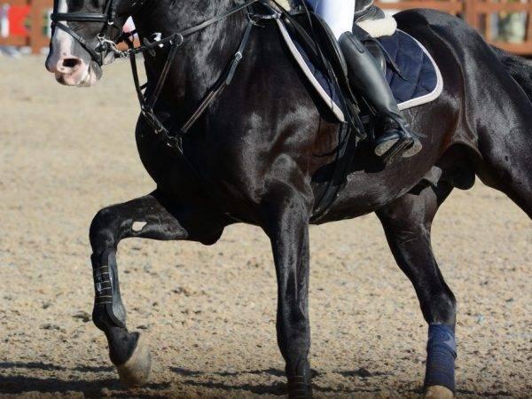 Части тела лошади названия | продвижение сайтов в яндекс