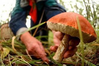 Полезные и вредные свойства грибов