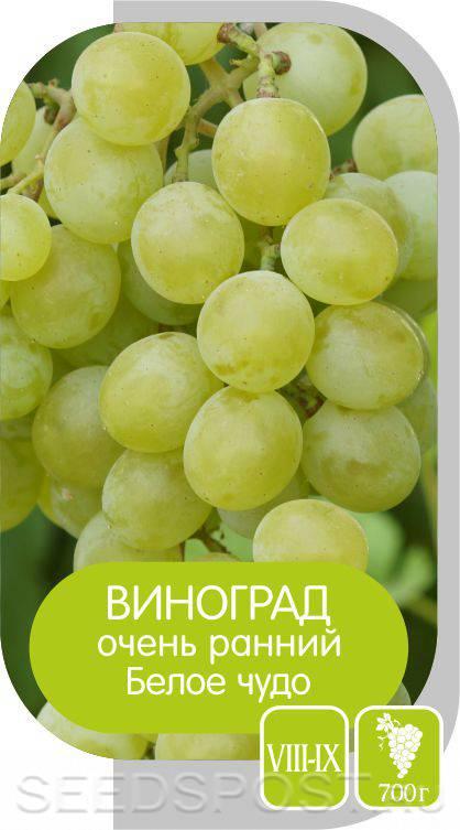 Виноград белое чудо: особенности сорта и секреты выращивания