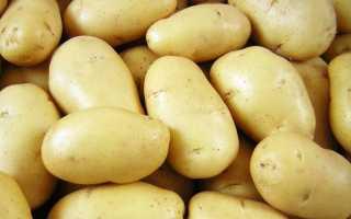 Картофель коломбо: описание сорта, сравнение, фото, отзывы