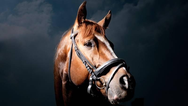 Какая продолжительность жизни у лошадей?