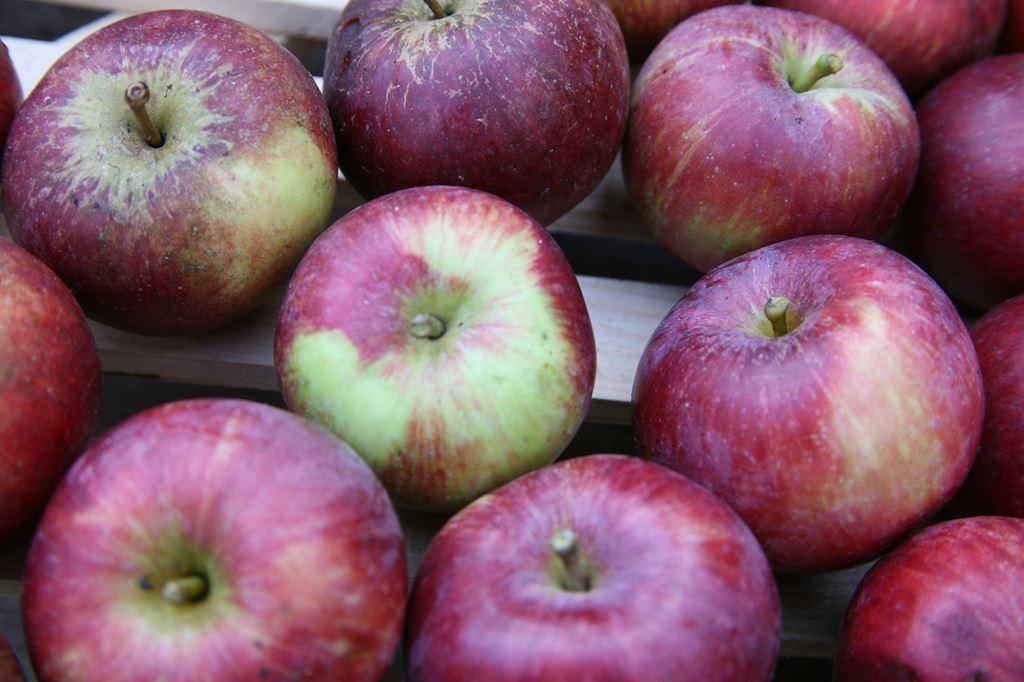 Яблоня спартан: прекрасный зимний сорт канадского происхождения