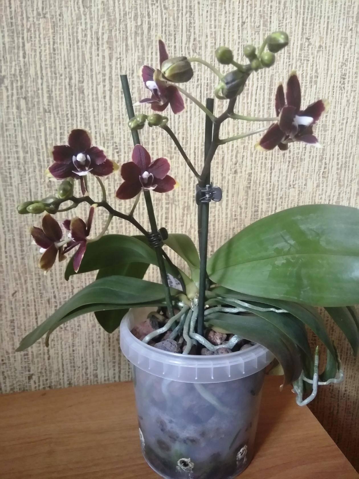 Нужен ли для орхидеи дренаж: что это такое, какой материал лучше выбрать и можно ли осуществлять посадку в керамзит? selo.guru — интернет портал о сельском хозяйстве