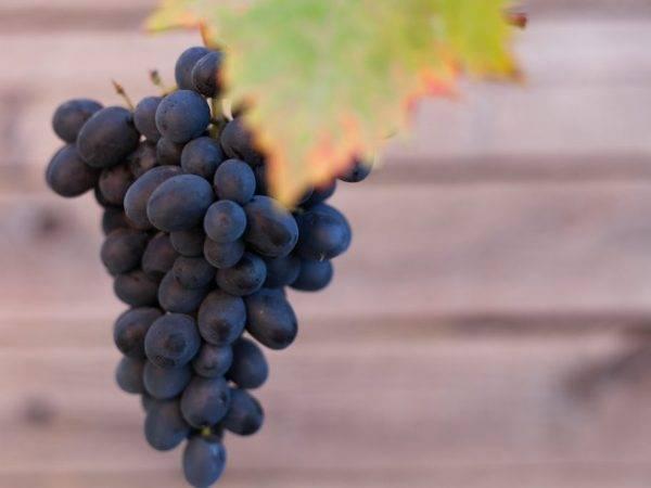 ᐉ блек гранд – столовый сорт винограда - roza-zanoza.ru