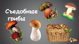 Головач: описание, сезон сбора, свойства, рецепты, похожие виды