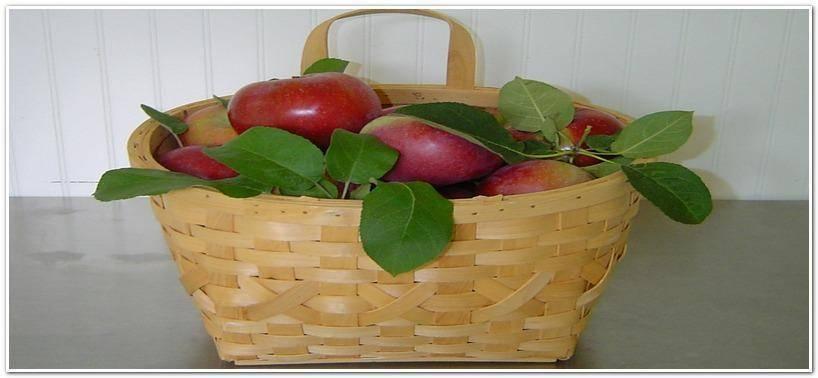 Как хранить яблоки на зиму в домашних условиях: хранение в погребе, при какой температуре хранятся