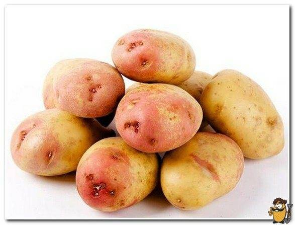 Описание сорта картофеля джелли