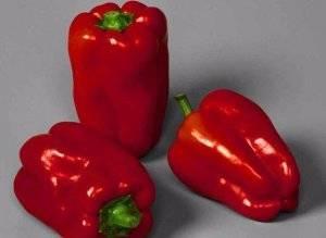 Перец рубик f1: отзывы, фото, урожайность и описание сорта