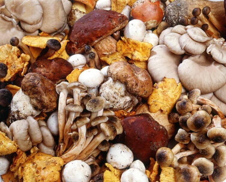 Белый гриб: лечебные и опасные свойства | food and health