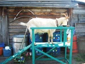 Советы по изготовлению доильного аппарата для коз