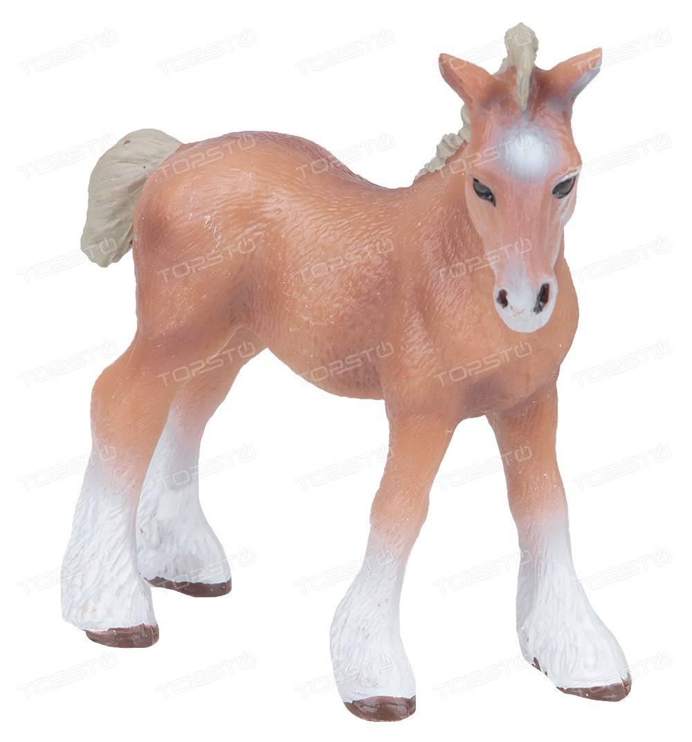 Как содержать лошадь, как ухаживать за ней и сделать разведение лошадей приятным увлечением