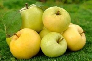 """Яблоня """"уральское наливное"""": описание сорта, фото, отзывы"""