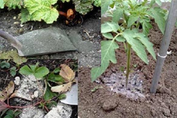 Как правильно использовать древесную золу, не навредив растениям?