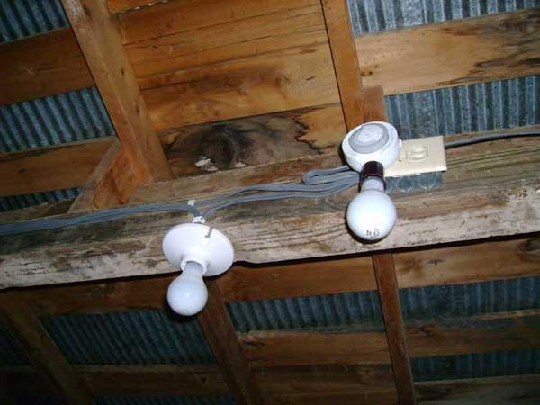 Световой день для кур-несушек зимой и летом: продолжительность, режимы освещения