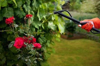 Готовим розы к зиме: памятка для садоводов