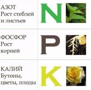 Чем подкормить розы весной для пышного цветения в саду весной и летом: названия удобрений