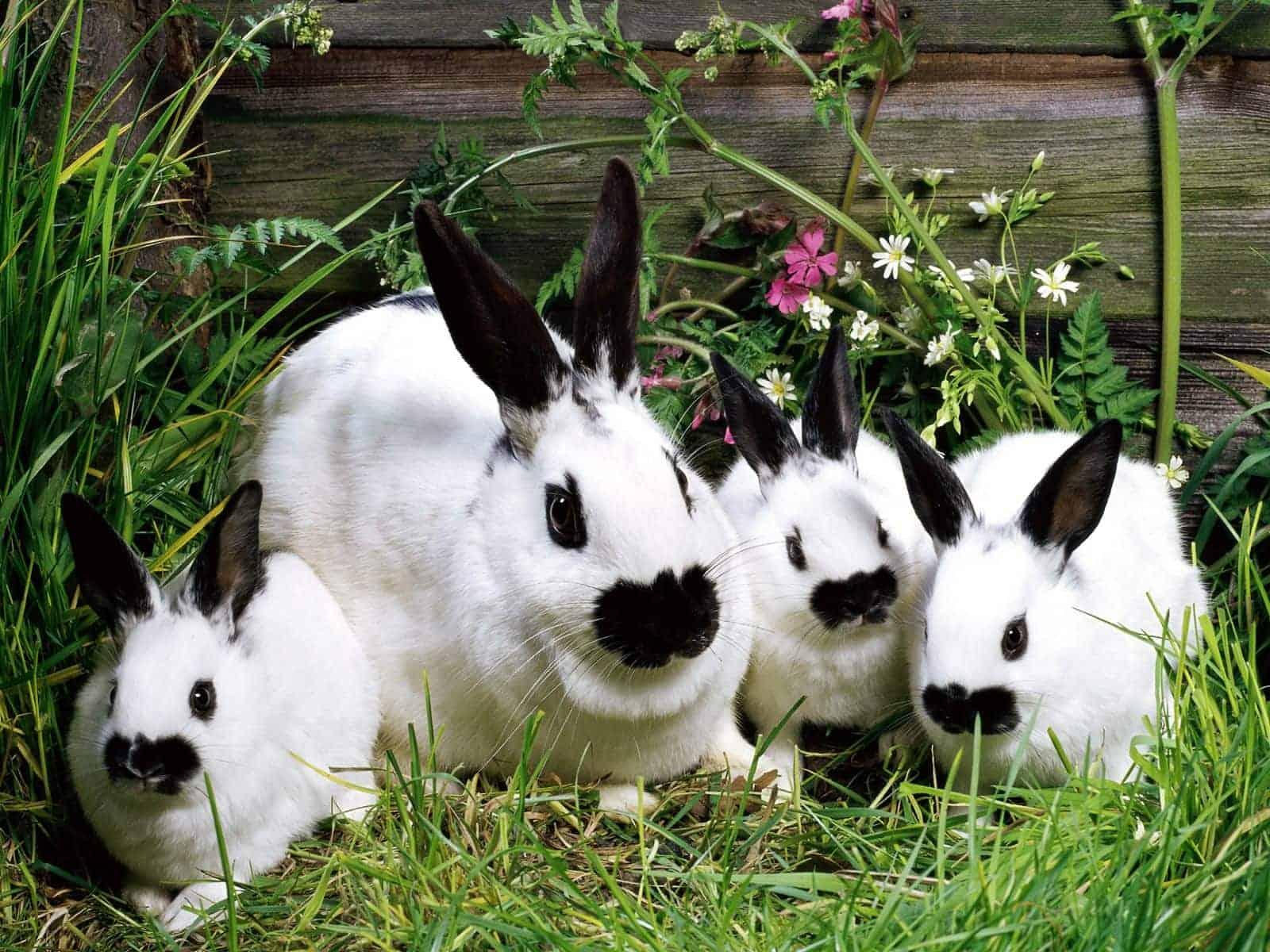 Правильное использование кроличьего навоза для огорода и дачи