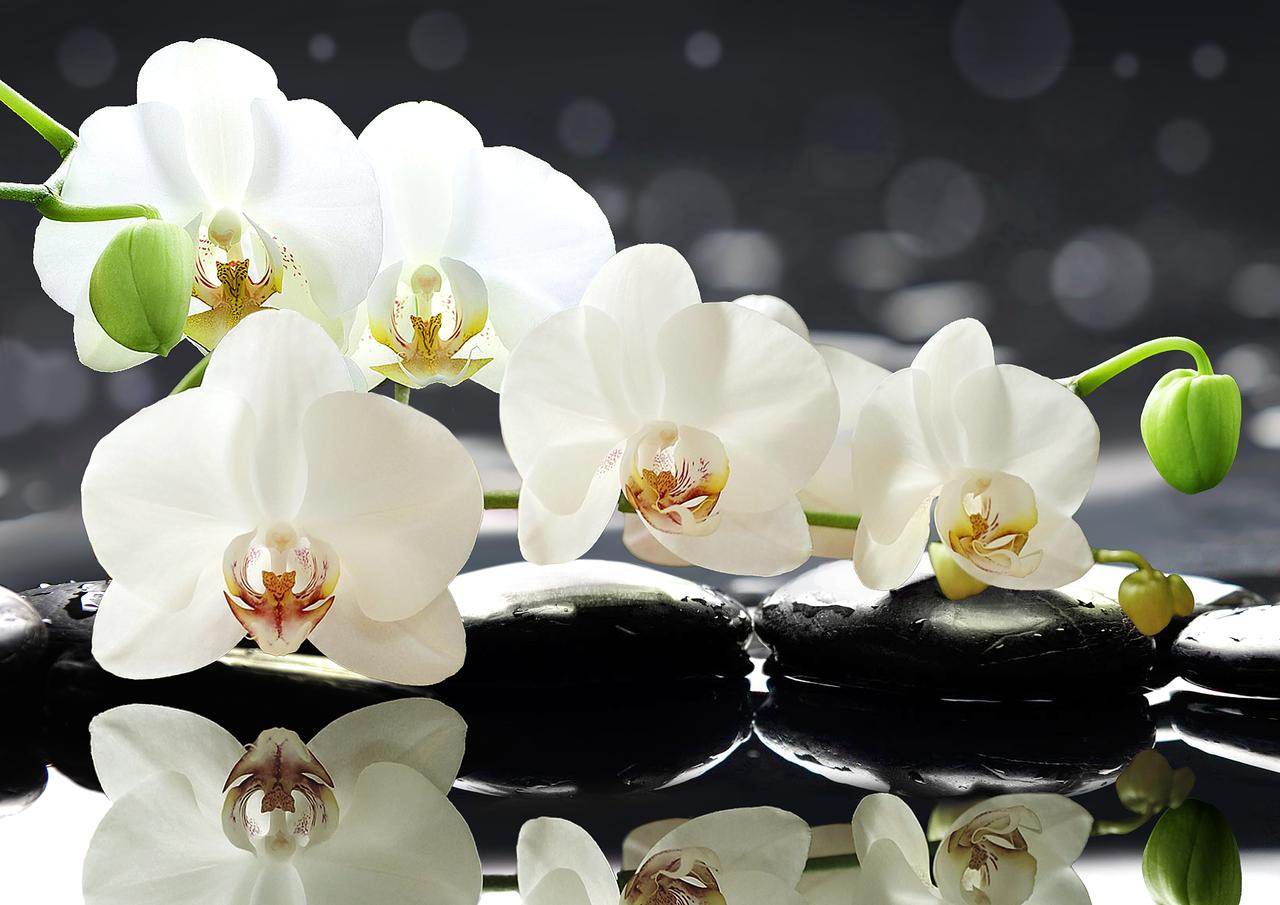 Почему не цветет орхидея: причины, что делать, как их разбудить