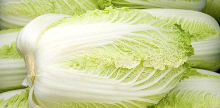 Пекинская капуста польза и вред для здоровья. польза и вред пекинской капусты. | здоровое питание