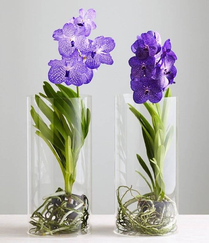 Выращивание орхидей в стеклянных горшках (вазах) без земли (грунта): как ухаживать за прозрачным вазоном и фото емкостей
