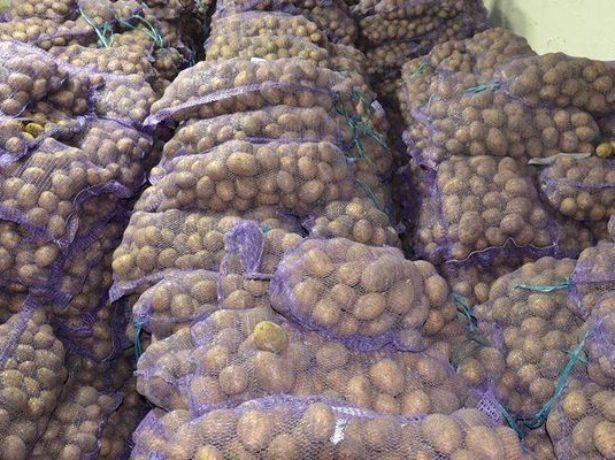 Как вырастить картофель венета: особенности ухода за раннеспелым сортом