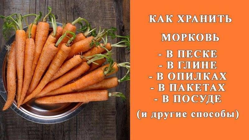 Морковь – кладезь витаминов на всю зиму. как правильно заложить овощ на хранение?