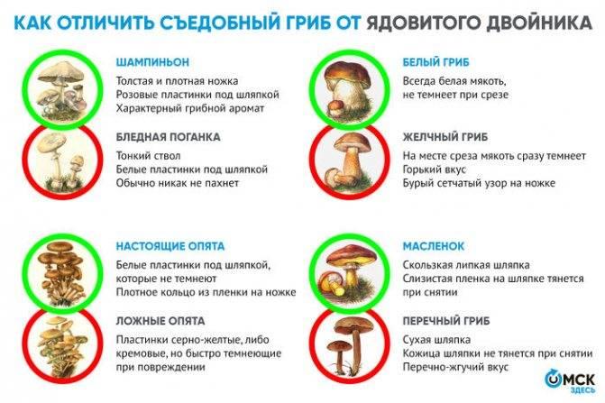 Грибы беларуси в 2020: съедобные и ядовитые, фото, грибные места