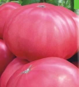 Томат розовый гигант: описание и характеристика сорта, фото, отзывы, видео, урожайность