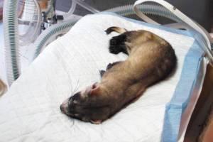Болезни десен: виды, причины, лечение и фото