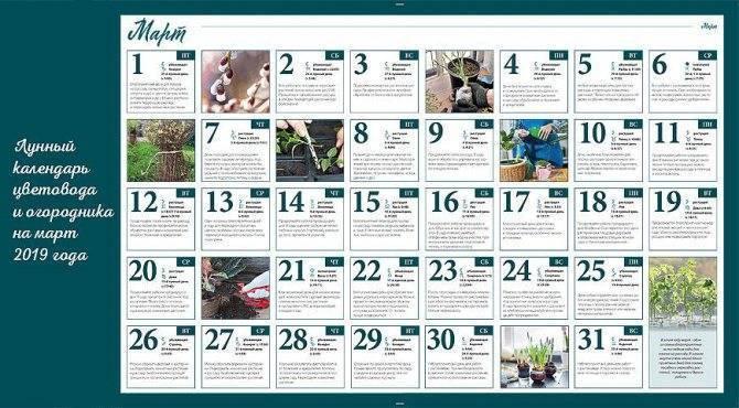 Высаживаем кабачки на рассаду в 2020 году по лунному календарю