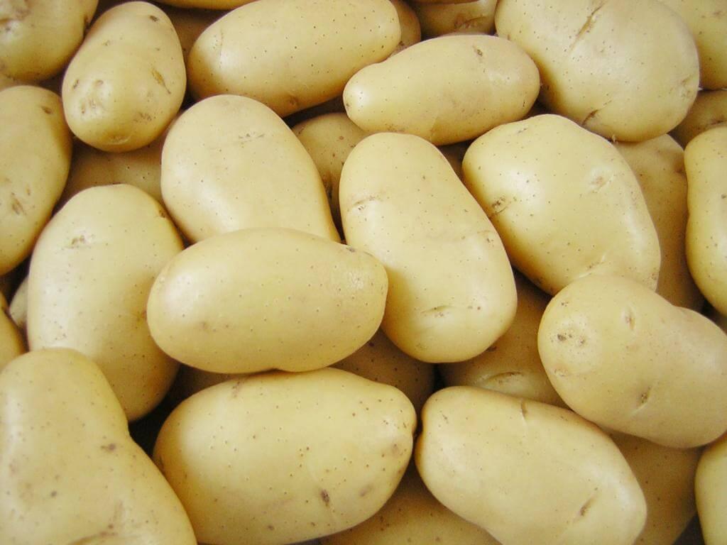 Сорта картофеля для западно-сибирского региона: список